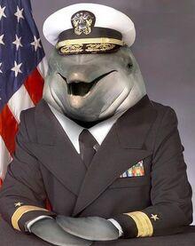 Dolphin commander