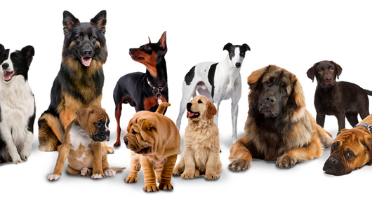 Dogs-build-large-group 637
