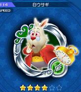114 White Rabbit