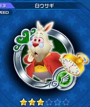 113 White Rabbit