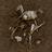 Livestock Bones
