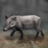 Wild Boar (discovery)