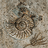 Snail Patterned Stone