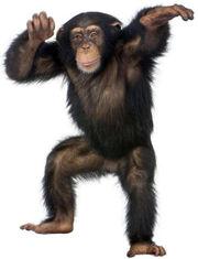 Monkey theme 300