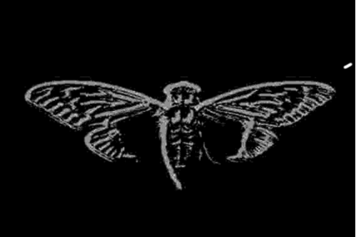 Uncovering Cicada Wiki