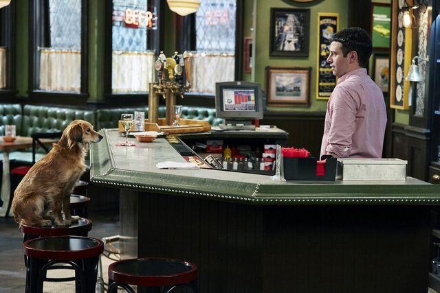 File:A Stray Dog Walks Into a Bar.jpg