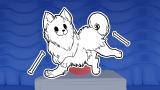 Card Skin (Annoying Dog)