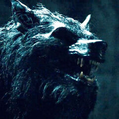 A Werewolf in <i>Rise of the Lycans</i>.