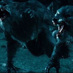 Werewolves attacking Sonja.