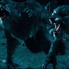 Werewolves attacking Sonja