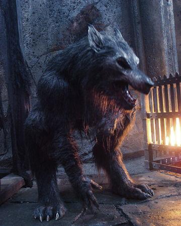 Werewolf | Underworld Wiki | Fandom