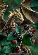 Blackberry dragonet