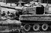 Tiger113