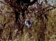 Pima Jane Doe scene