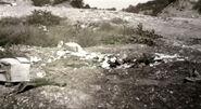 Teala crime scene