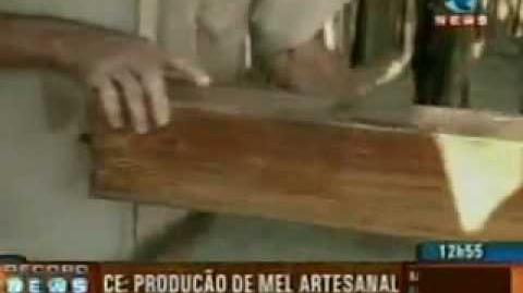 RECORD NEWS - MEL DE ABELHA E CISTERNA - RIQUEZAS DO CEARÁ
