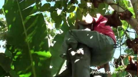Curso de Sistemas Agroflorestais - ipoema.org.br - parte 3 de 3