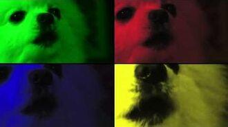 Do the dog.avc