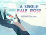 Una Sola Rosa Pálida