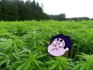 Steven droga