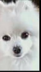 Perro Blanco mirada