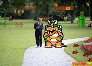 Bowser and bush