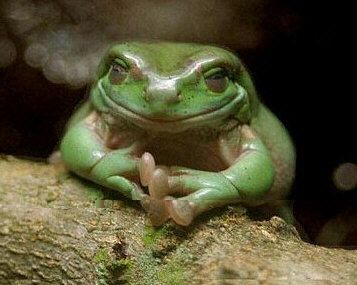 latest?cb=20180114022021 - Extinction event that wiped out dinosaurs cleared way for frogs - Science and Research
