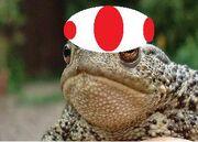 Toad lol