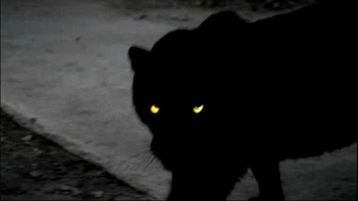 Werecats Unnatural World Wiki Fandom Powered By Wikia