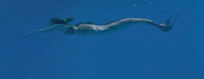 Lyla as mermaid swim
