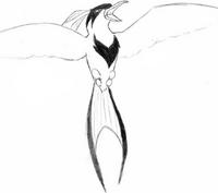 Raptern