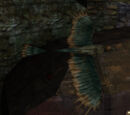 Nali Bird