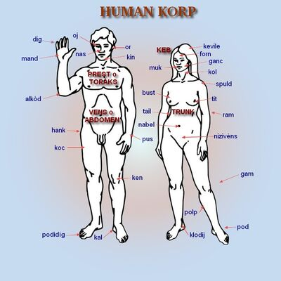 Human korp1
