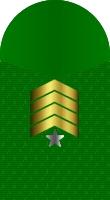 Sleeve marine sergeant major