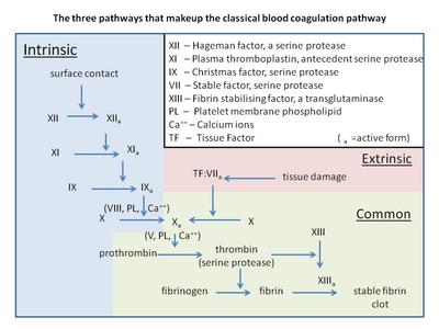 Blood coag pathways