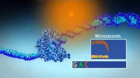 Single Molecule Real Time Sequencing - Pacific Biosciences