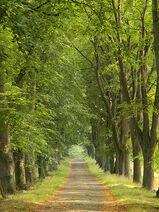 UWN - Lüneburger Heide