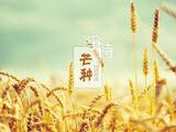 芒种 (Mángzhòng)