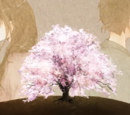 恋桜 (Koizakura)