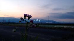 Nayia