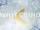 ホワイトバード (White Bird)