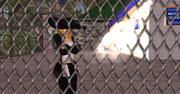 Elpha Prison Release 1