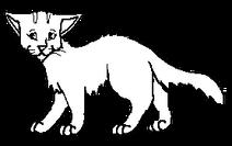 Samotář.kočkaD