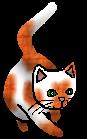 Nejmenované kotě (OaL).kotě