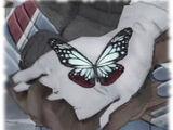 Mottled Vagabond Butterfly