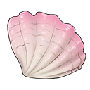 White-Wave Seashell