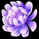 Crescent Flora