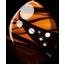 Shadowed Monarch Pegasus Egg