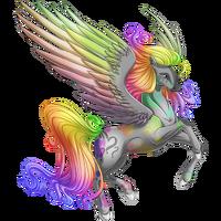 Confusion Pegasus Rainbow
