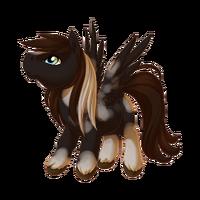 Black Pinto Pegasus Baby